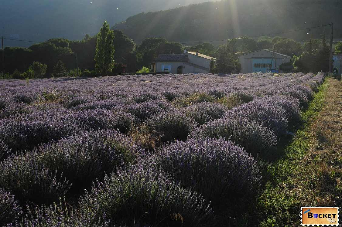 France Provence Sault