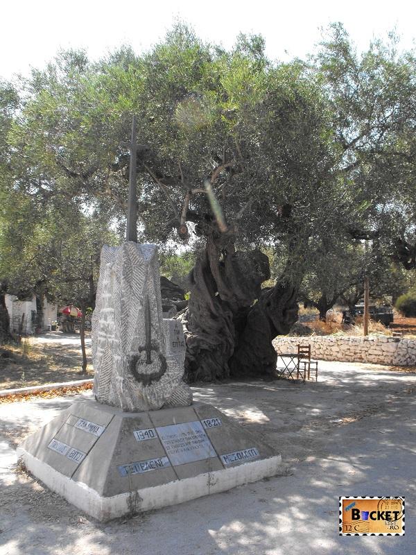 Old Olives tree Exo Chora Zakynthos