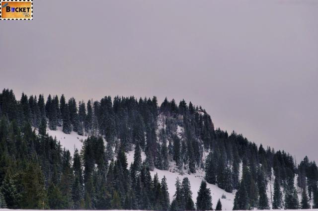 munţii Apuseni - peisaj de iarnă
