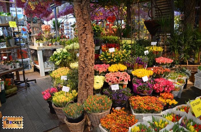 Bloemenmarkt, flori in Amsterdam