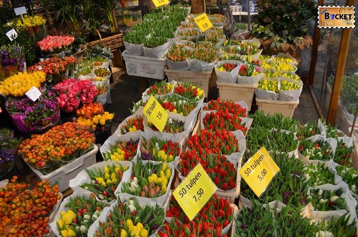 Lalele @ Bloemenmarkt, piaţa de flori din Amsterdam