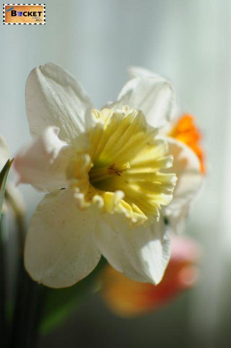 Poiana Narciselor Zervesti