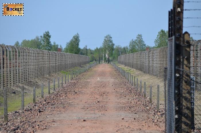 Drum spre crematoriu - Lagărul de concentrare Auschwitz II - Birkenau