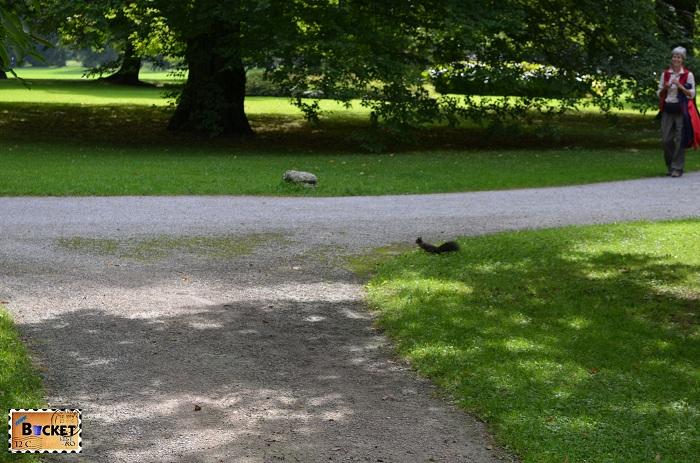 Veverita in parc