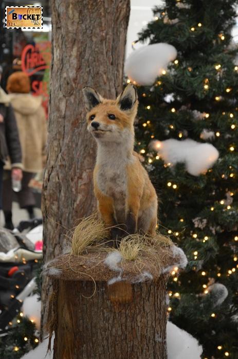 Vulpe in peisaj de iarnă la Forum Debrecen