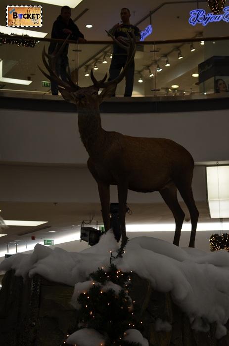 Cerb in peisaj de iarna la Mini târgul de Crăciun din Forum Debrecen