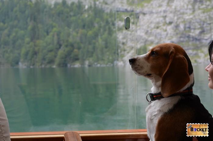 Caine in barca pe lacul Koenigssee