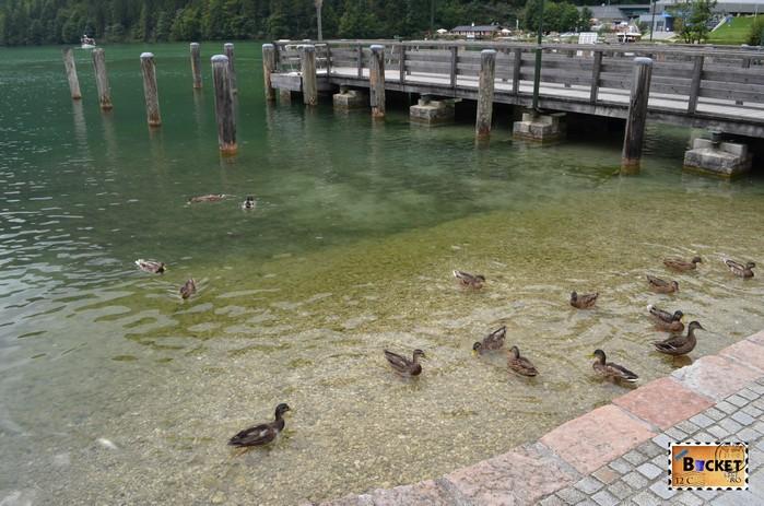 Rate pe Lacul Konigssee