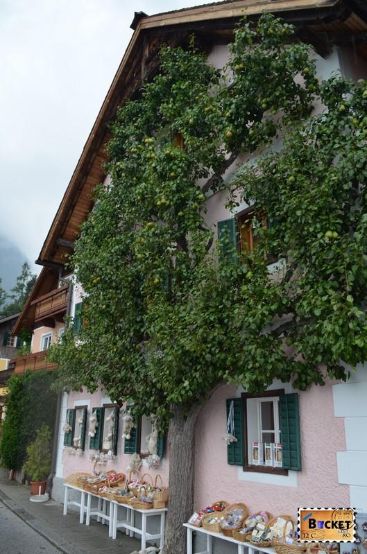 Copac in fata casei